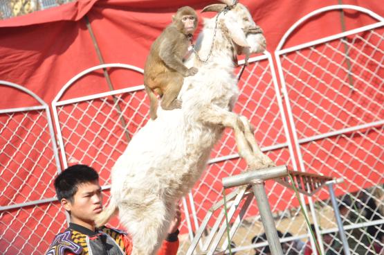 驻马店南海动物园驯兽表演迎新春