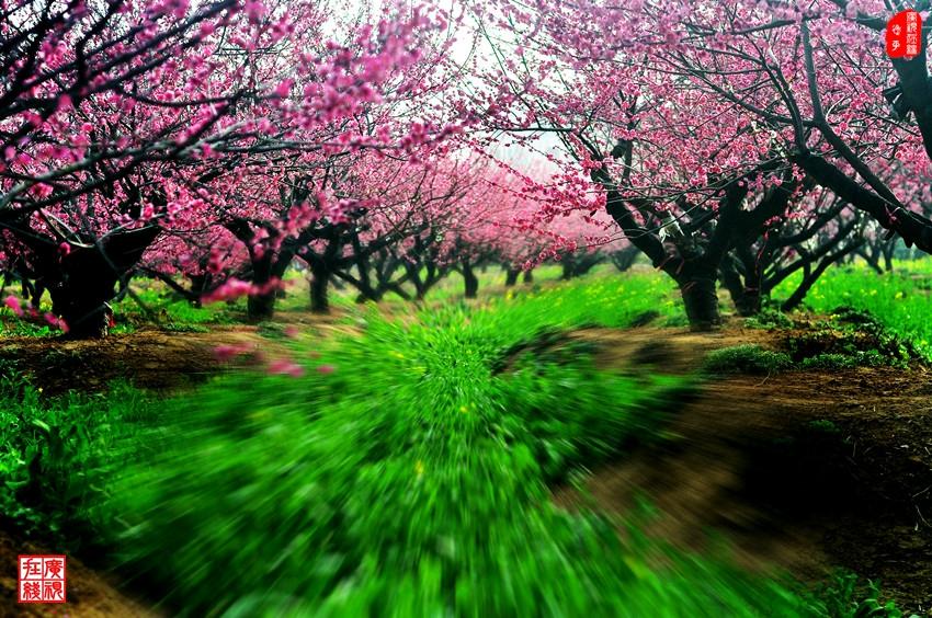 (6)走向春天