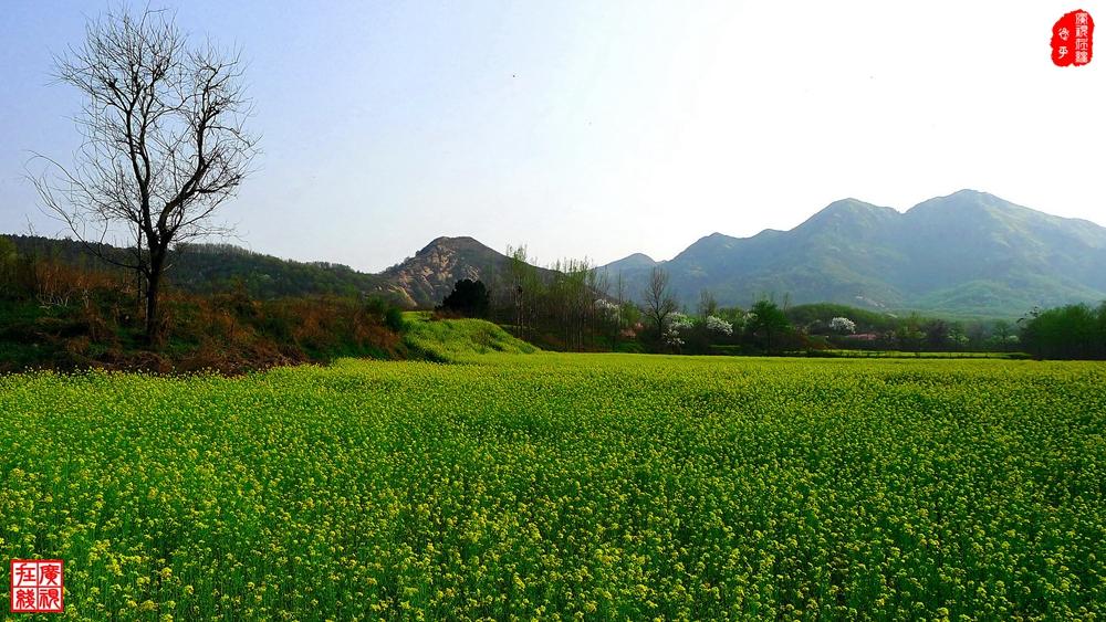 P1050472-0 绿野