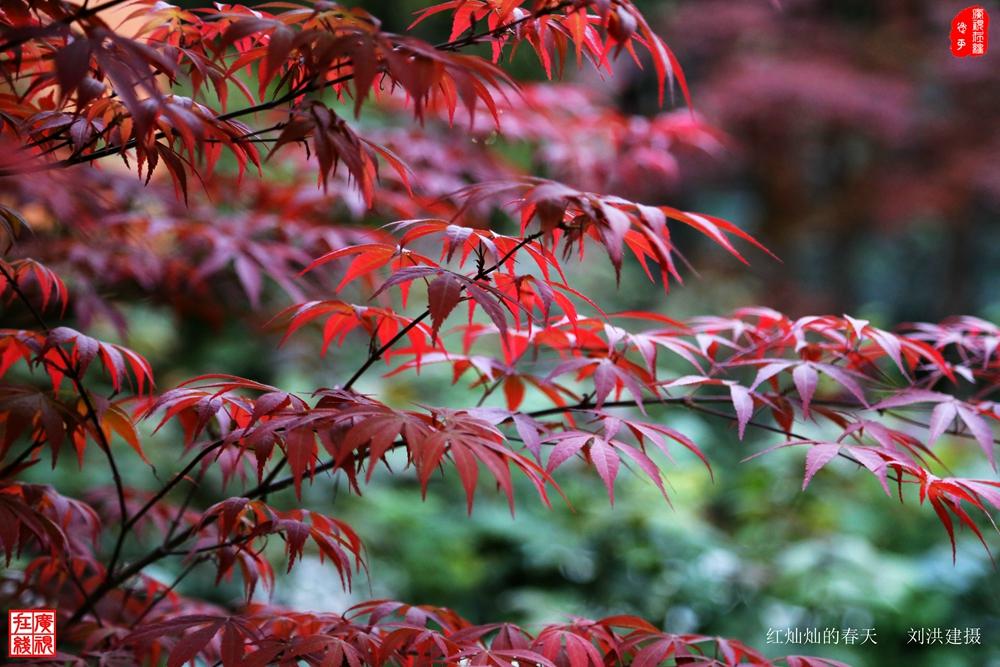 红灿灿的春天