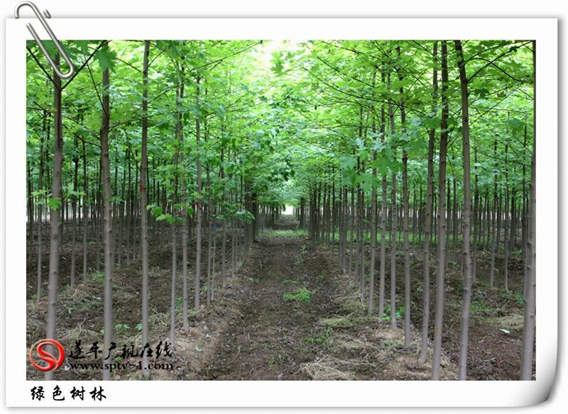 绿色树林2_副本