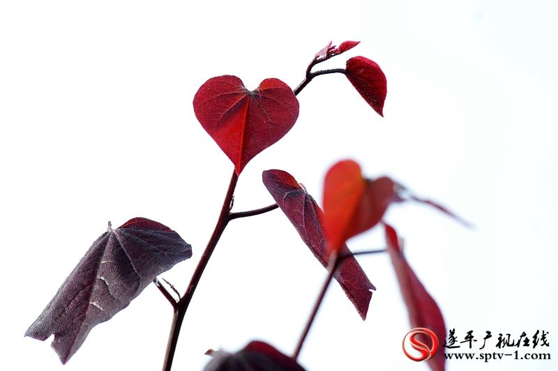 微信图片_20170512150219_副本