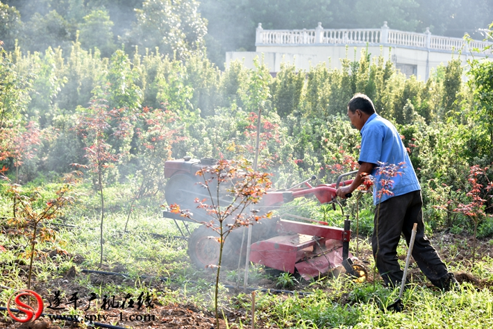 图为:朱屯村土地流转后,剩余劳动力在名品彩叶务工。