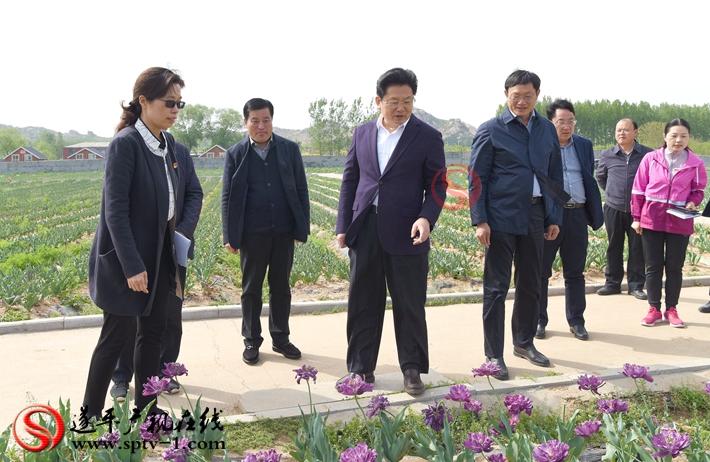 上图:驻马店市委副书记、市政府市长朱是西在温泉小镇郁金香园调研。 摄影:赵建明